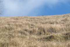 5.01.2020 Fosto- Stratta   Monte Nerone