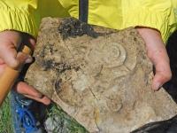 fossili 18.05 11
