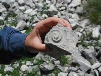 fossili 18.05 12