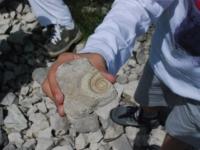 fossili 18.05 17