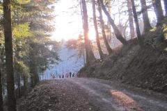 Capodanno 2015-16 Foreste Casentinesi