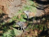 deer-watch-cingli