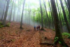 Foresta della Lama 05.05.13