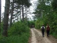 Foresta delle Cesane 09.06.13