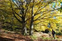 Foreste Casentinesi 1-2.11.2014