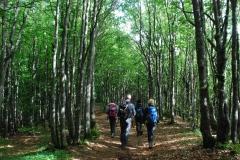 Foreste Casentinesi 2-4-5 giugno 2016