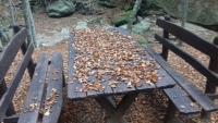 Foreste Casentinesi 20-22.10.17