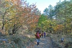 Foreste Casentinesi autunno 2015