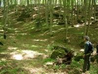 la-verna-wood