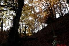 Monte Carpegna - 25 Ottobre 2020