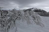 Monte Catria (Rif.Cotaline) 07.03.15