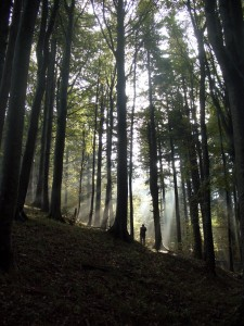 foresta Penna Badia copia