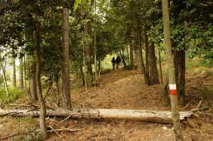 bosco di Campo d'Asino