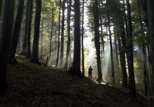 foresta Penna Badia low