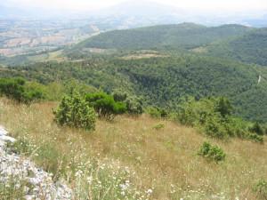 Image-50